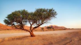 Arbre isolé dans le désert de Namib pris en janvier 2018 photographie stock