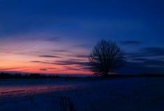 Arbre isolé dans le domaine au coucher du soleil en hiver Photo stock
