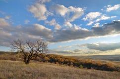 Arbre isolé dans le domaine d'automne contre un beau ciel Photos stock