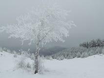 Arbre isolé dans le Frost Image libre de droits