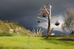 Arbre isolé dans les montagnes, Colonia Tovar, Venezuela. Image stock