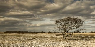 Arbre isolé dans un désert des roches images libres de droits