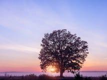 Arbre isolé dans un domaine brumeux de matin au lever de soleil photo libre de droits