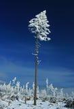 Arbre isolé de l'hiver images stock
