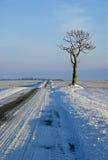 Arbre isolé en horizontal de l'hiver à Noël Images stock