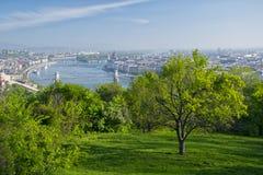 Arbre isolé en parc de colline de Gellert, Budapest, Hongrie Images stock