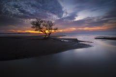 Arbre isolé et coucher du soleil Photographie stock libre de droits