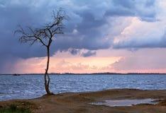 Arbre isolé et nuages lourds Photographie stock
