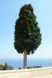 Arbre isolé peu commun dans le monastère de Preveli Crète, Grèce images stock