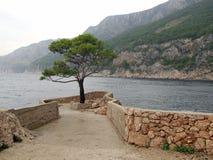 Arbre isolé près de la mer Image libre de droits