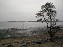Arbre isolé près de la plage après le courant de marée, Hadyai, Songkhla, Thaïlande Photo libre de droits
