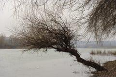 Arbre isolé près de la rivière Images stock