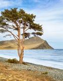 Arbre isolé près de lac Baikal Images libres de droits