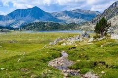 Arbre isolé près de lac Montmalus en Andorre Photo libre de droits