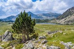 Arbre isolé près de lac Montmalus en Andorre Photos libres de droits