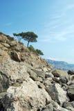 Arbre isolé sur des roches Image stock