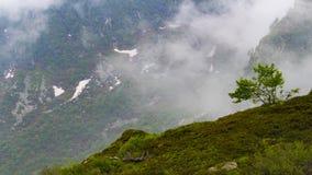 Arbre isolé sur la montagne brumeuse photo libre de droits