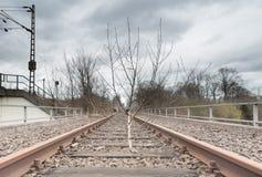 Arbre isolé sur la voie de chemin de fer à Muenster images libres de droits