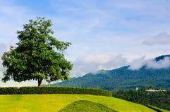 Arbre isolé sur le dessus d'une colline Images libres de droits