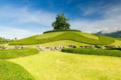 Arbre isolé sur le dessus d'une colline Image libre de droits