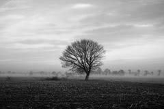 Arbre isolé sur un champ avec un ciel orageux Photos stock