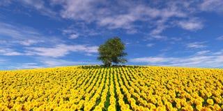 Arbre isolé sur un champ des tournesols sous un ciel nuageux Images stock