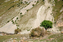 Arbre isolé sur un fond d'une gorge de Chegem de monticule de sable Images libres de droits