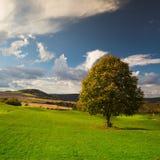 Arbre isolé sur un terrain de golf d'automne Image libre de droits