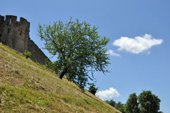 Arbre isolé sur une colline à côté de l'arcassonne de ¡ de la forteresse Ð Images libres de droits