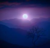 Arbre isolé sur une colline dans un clair de lune photo stock