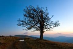 Arbre isolé d'automne sur le dessus de côte de montagne de nuit Photos stock
