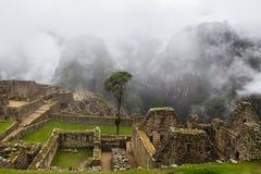 Arbre isolé dans la place dans la ville antique Images libres de droits