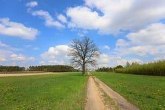 Arbre isol? par la route, ressort Pologne photo libre de droits