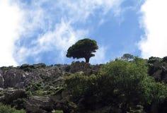 Arbre isolé près d'un dessus de montagne de Zas Photos libres de droits