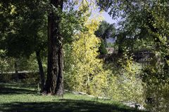 Arbre jaune Image libre de droits