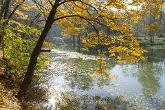 Arbre jaune d'automne Image stock