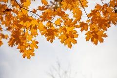 Arbre jaune d'automne contre le ciel Photo stock