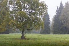 Arbre jaune d'automne sur le champ vert Photos stock