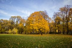 Arbre jaune en parc d'automne Photo stock