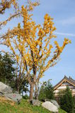 Arbre jaune en stationnement Photo libre de droits