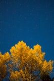 Arbre jaune et ciel étoilé la nuit automne Photos stock