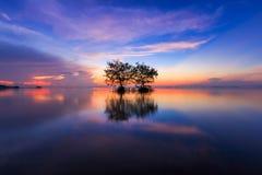 Arbre jumel dans le lac au temps crépusculaire, Thaïlande Image libre de droits