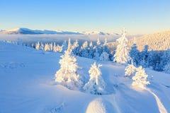 Arbre juste blanc le jour d'hiver de conte de fées Image stock