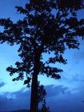 Arbre léger bleu de début de la matinée de nature de nuit Photo libre de droits