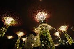 Arbre léger Singapour Photographie stock