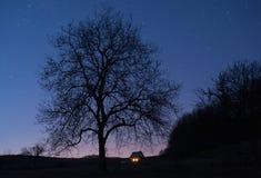 Arbre la nuit Images stock