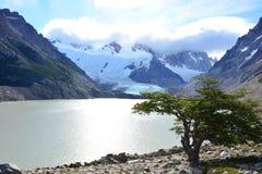 Arbre, lac et glacier à l'intérieur du parc national de visibilité directe Glaciares, EL Chaltén, Argentine Image stock