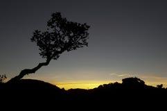 Arbre le dessus du plateau de Roraima photos stock