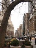 Arbre le long de 5ème avenue Photo stock