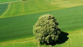 arbre libre au ciel bleu clips vidéos